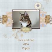 Poppy QP