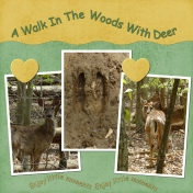 A Walk In The Woods With Deer