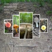 Mushroom Hike 2