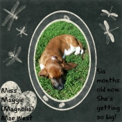 Miss Magnolia (Maggie) Mae 6 months old.
