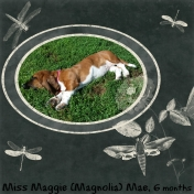 Miss Magnolia (Maggie) Mae 6 months old. 2