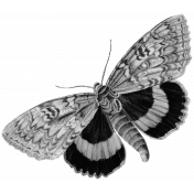 Vintage Butterfly Template 04