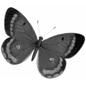 Pond Life Butterfly Template