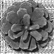 Outdoor Adventures- Element Template- Pine Cone Flower 01