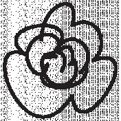 Flower Kit #25- Flower 25g