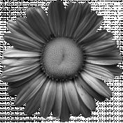 Daisy Template 001