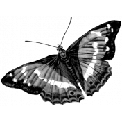 Butterfly Template 009