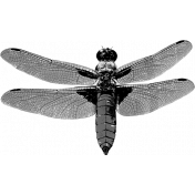 Dragonfly Template 001