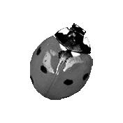 Ladybug Template 02