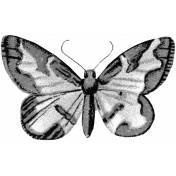 Butterfly Template 011