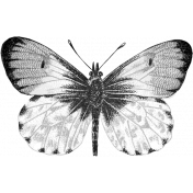 Butterfly Template 012