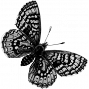 Butterfly Template 013