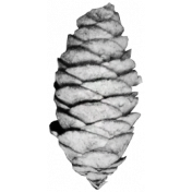Pinecone Template 1
