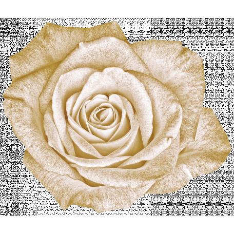Vintage - November Blogtrain White Rose