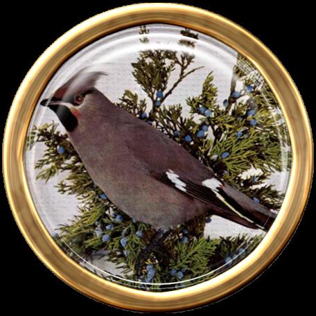 Ephemera Bird Brad 08