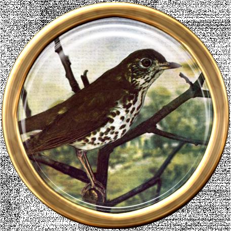 Bird Brad 10