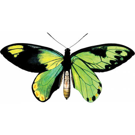 The Lucky One - Green Butterfly