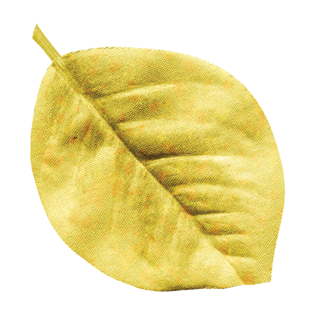 Oh Baby Yellow Silk Leaf