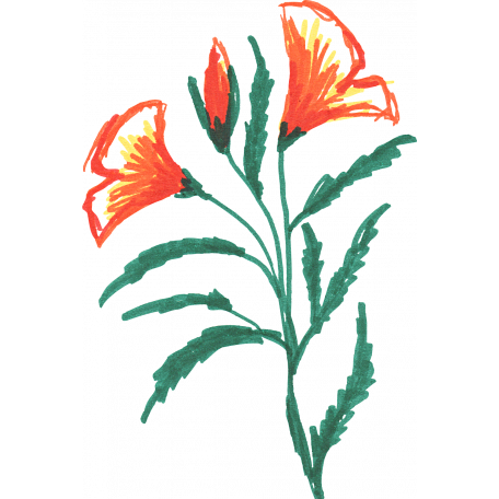 Flower Sketches No 2 Sketch 02 Graphic By Elif Sahin Pixel Scrapper Digital Scrapbooking