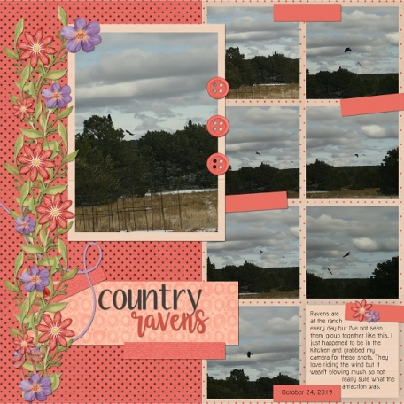Country Ravens