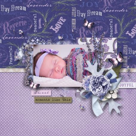 Lavender Fields (1)