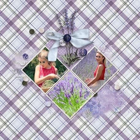Lavender Fields (2)