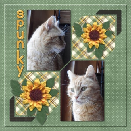Sunflowers and spunky