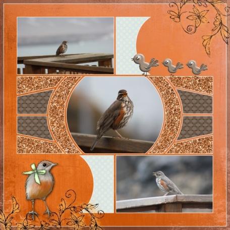 bird from iceland