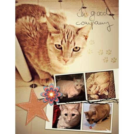 Lynn's Cat