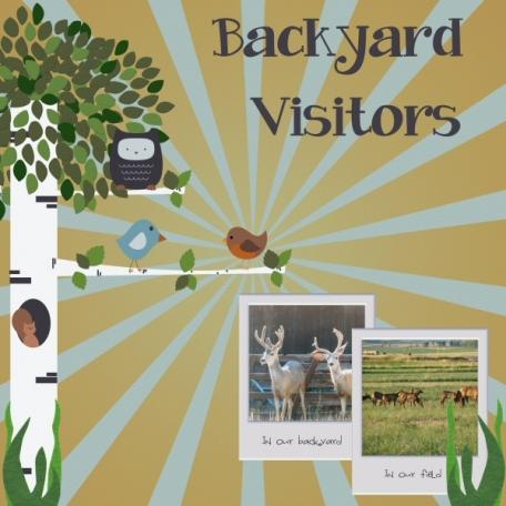 Backyard Visitors