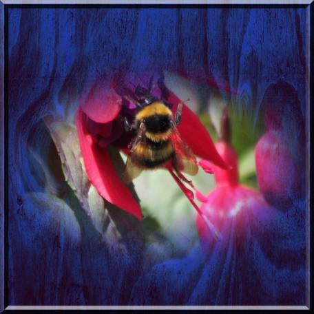 Blue Wood Bee