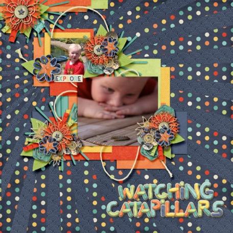 Watching Catapillars
