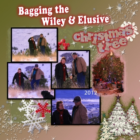 Bagging the Wiley & Elusive Christmas Tree