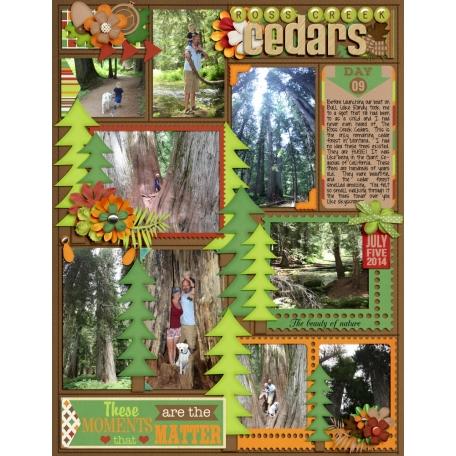 Day 9 - Ross Creek Cedars