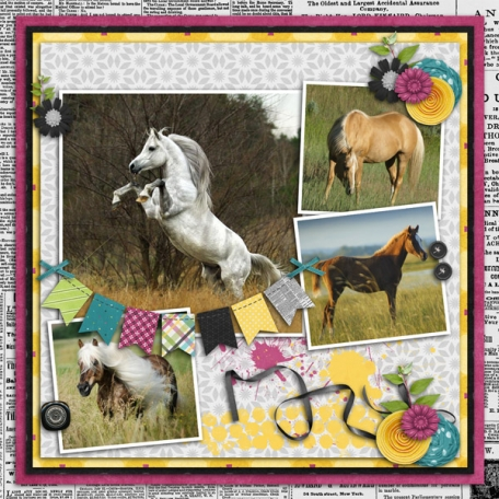 Horses in Tall Grass 2