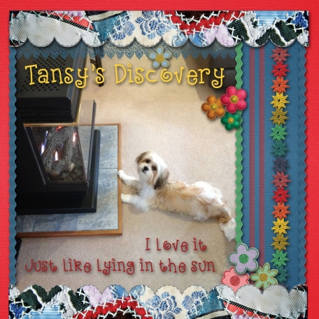 Tansy's Discovery
