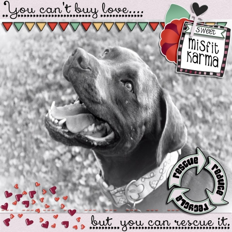 You Can't Buy Love But You Can Rescue It - Misfit Karma