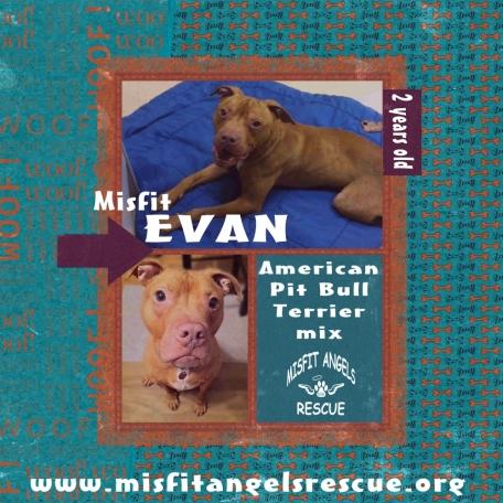 Misfit Evan
