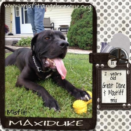 Misfit Maxiduke!
