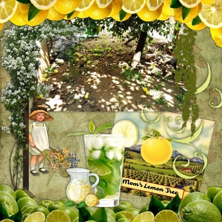 Mom's Lime Tree