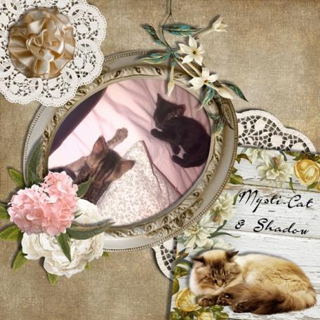 Shadow & Mysti-Cat