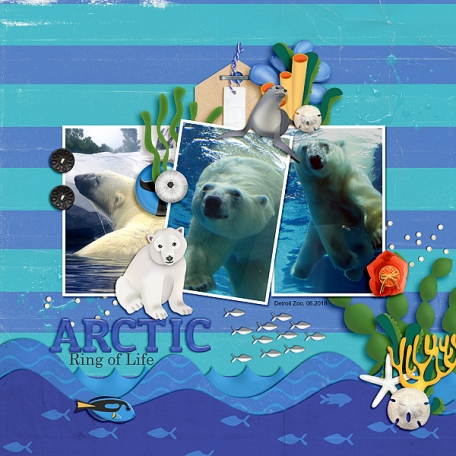 Arctic Ring of Life