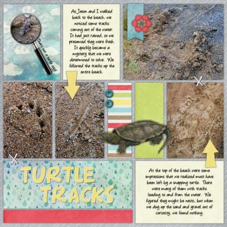 Nick's Lake 2014 - Turtle Tracks