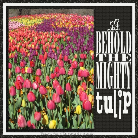 BEHOLD THE MIGHTY tulip - revised (tulip festival 1/5)
