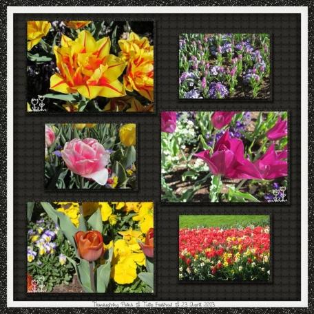 tulip festival 2/5