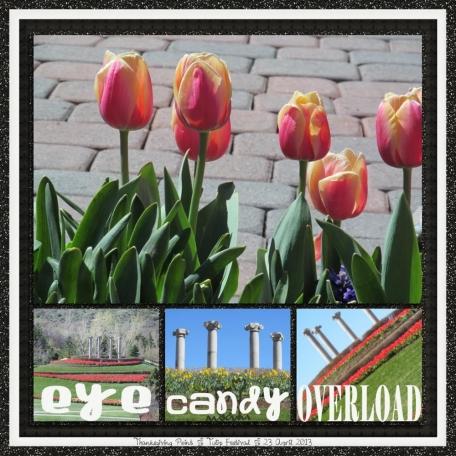tulip festival 5/5