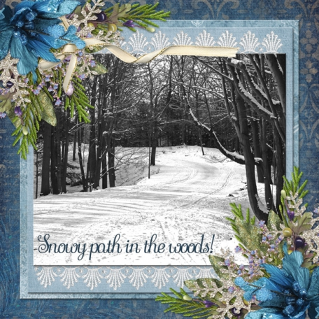 Snowy path in the woods!