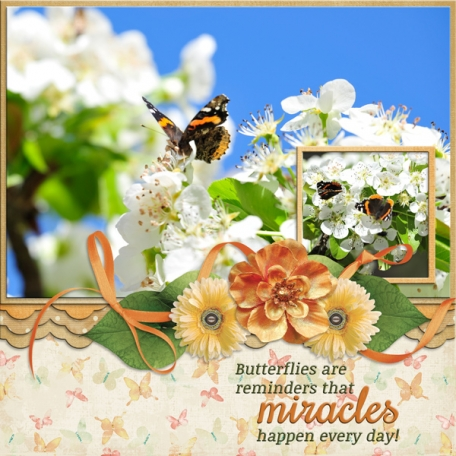 Butterflies are reminders that miracles happen everyday!