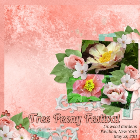 Tree Peony Festival - 3