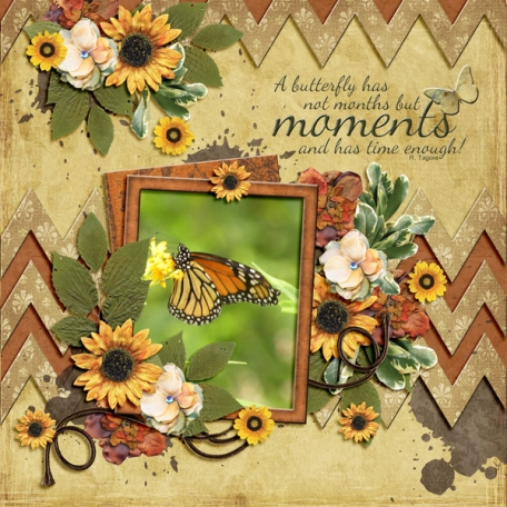 A butterfly has not months, but MOMENTS ... (ads)
